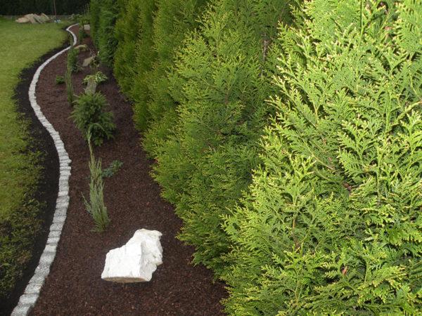 Obsada ogrodu w Międzyrzeczu